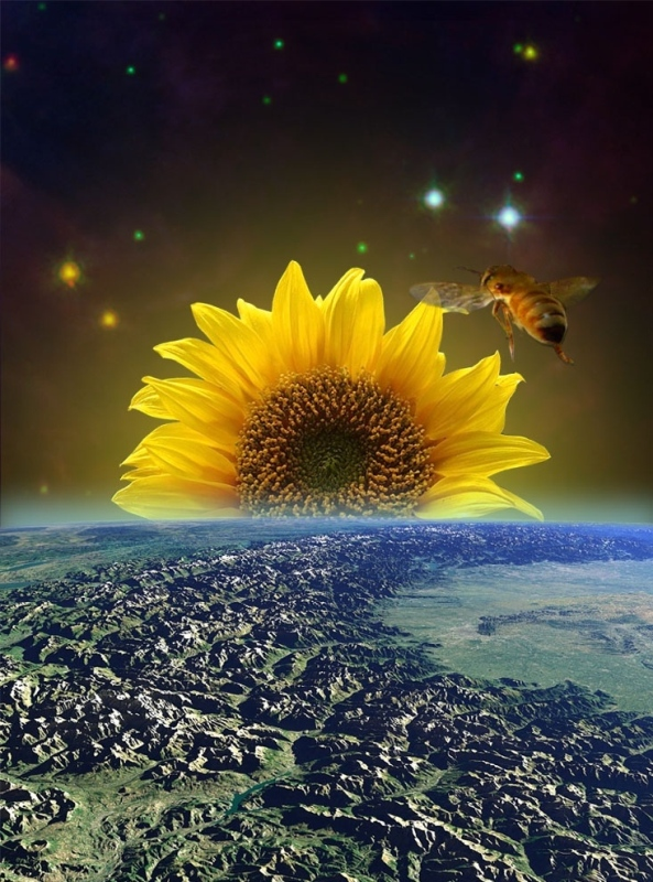 Sunflower-Space-Sunrise-37190.jpg